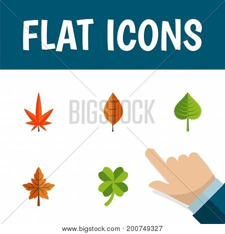 Flat Icon Foliage Set Of Aspen, Foliage, Leafage And Other Vector Objects