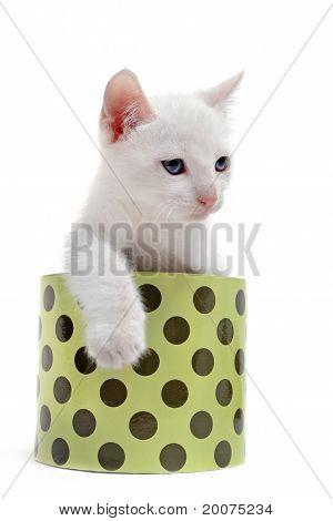 White Kitten In A Box