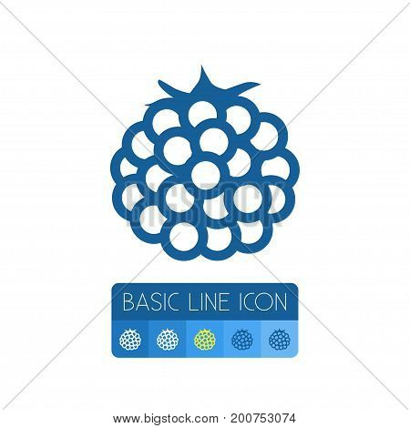 Plant Vector Element Can Be Used For Razz, Raspberry, Berry Design Concept.  Isolated Fruit Outline.
