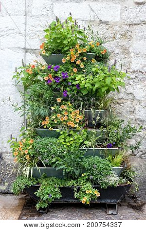 Ornamental plants on a wall display outdoors in flower pots on a metal rack with assorted colorful summer flowers