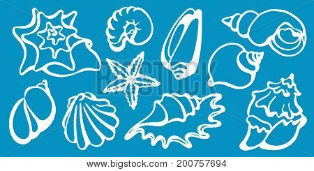 Set of sea shells on a blue background. Undersea world. Starfish shell conch spiral helix. Vector art line collection eps.10