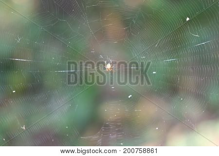 Beautiful little sunny forest spider on the web wants to eat.
