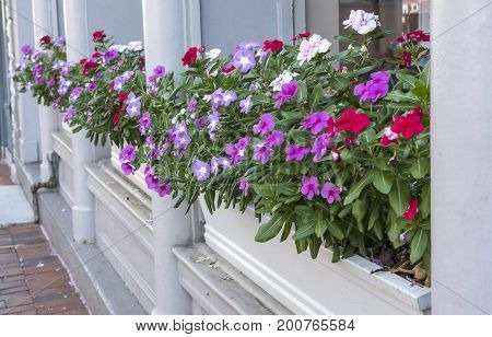 Boxes of Flowers on Display in Front of a Store Window