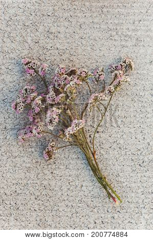 A bouquet of white pink little flowers on a concrete texture. Conceptually. Template. Art