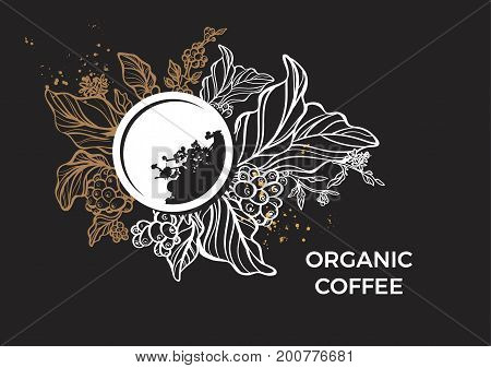 Template of branch of coffee tree leaves flowers and beans. Botanical drawing on black background. Floral decor for organic product. Vector illustration for print menu background. Space for text