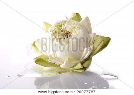 A White Lotus And Water Drop With Isolated White Background.