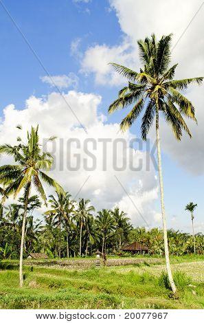 Tropical Landscape In Bali Indonesia