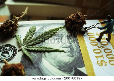 Marijuana Leaf & Bud On Money High Quality