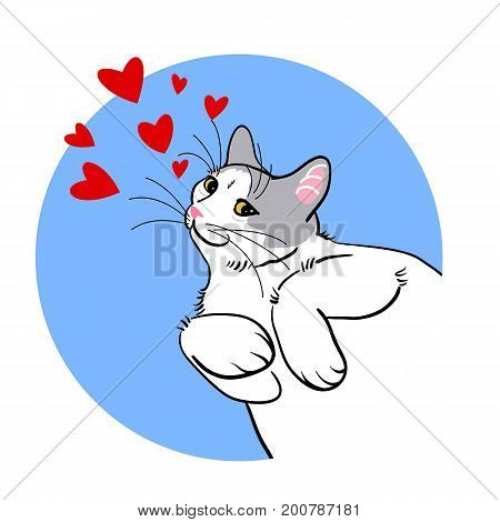 Vector illustration of beautiful white-grey cat lying and snuggling paws