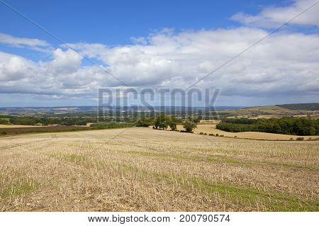 Agricultural Countryside Vista