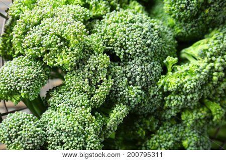 Fresh green broccoli background