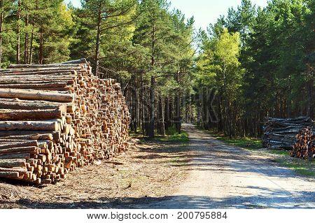 forest fell trees cutting ecology destroy cut deforestation felling