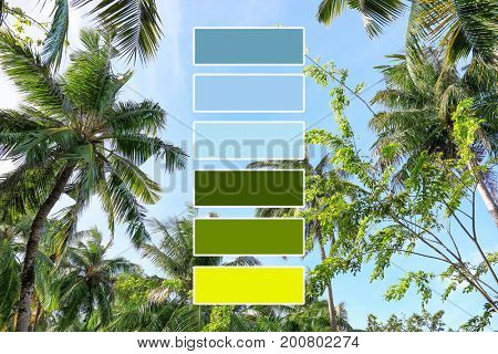 Beautiful tropical palms on blue sky background. Palette with green color