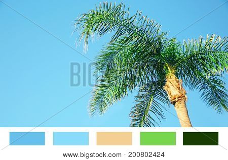 Beautiful tropical palm on blue sky background. Palette with green color