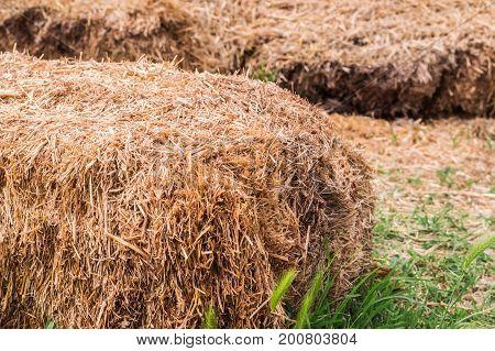 Closeup Of Hay Bales In A Village.
