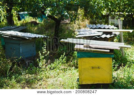 An apiary in the garden. An apiary in the garden. Multicolored old wooden hives in the garden. Side view.