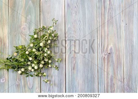 Wild bouquet of clover on a wooden background