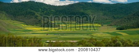 Beauty colors of summer Altai. Green and yellow meadow with trees on mountain background