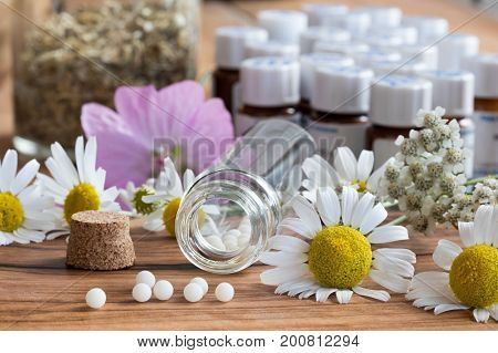 A bottle of homeopathic globules with chamomile and other herbs and flowers in the background
