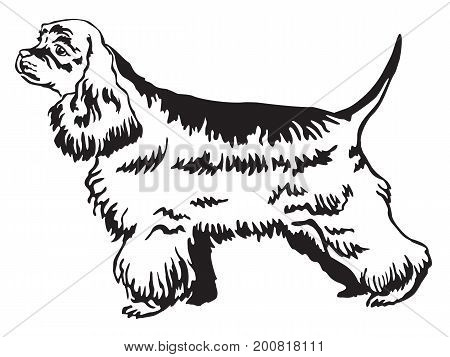 Decorative portrait of standing in profile American Cocker Spaniel vector isolated illustration in black color on white background