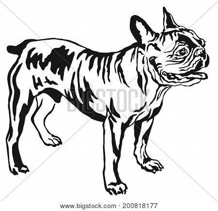 Decorative portrait of standing in profile French Bulldog vector isolated illustration in black color on white background