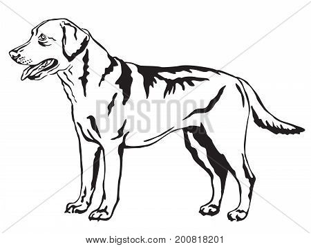 Decorative portrait of standing in profile Labrador Retriever vector isolated illustration in black color on white background