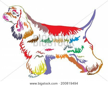 Colorful decorative portrait of standing in profile dog American Cocker Spaniel vector isolated illustration on white background