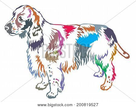 Colorful decorative portrait of standing in profile dog English Springer Spaniel vector isolated illustration on white background