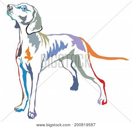 Colorful decorative portrait of standing in profile Weimaraner vector isolated illustration on white background