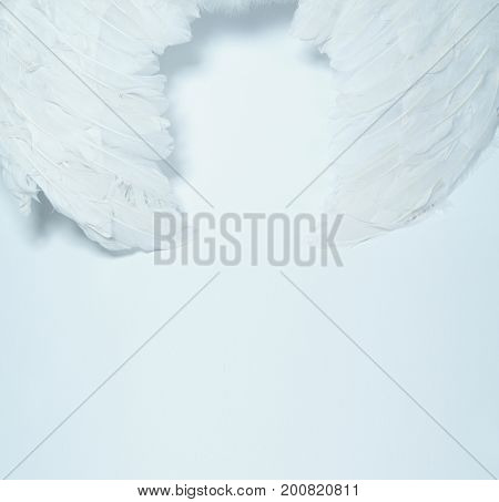 White feather. White angel wing.