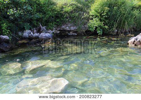 laguna rodeada de naturaleza verde y agua del bosque.