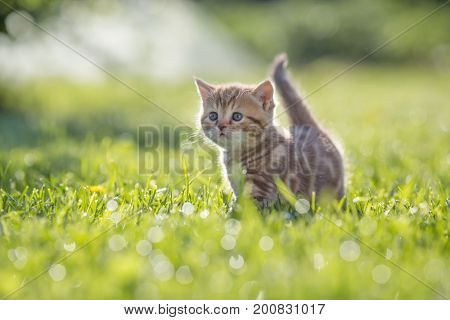 Funny cat standing in green grass