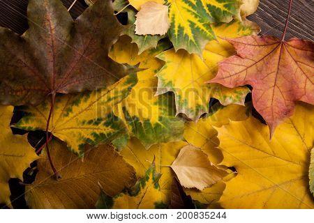 autumn leaf (top view) orange background