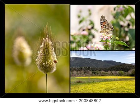 Spring collage. Butterfly, spikelet and spring, mountain meadow