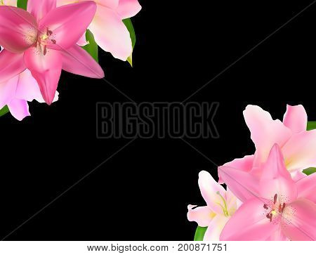 Vector Illustration with Pink Lily Isolated on Black Background EPS10