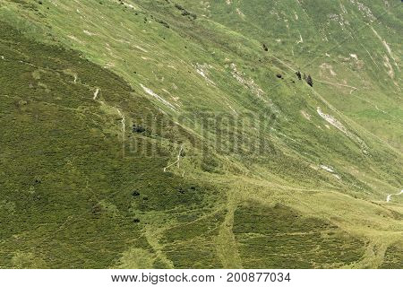 Alpine grassland in the Bavarian Alps in Southern Germany.
