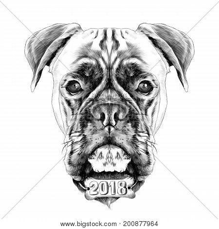 the head of the dog breed boxer dog collar c a vector sketch graphics black and white illustration monochrome with the collar bone the new year