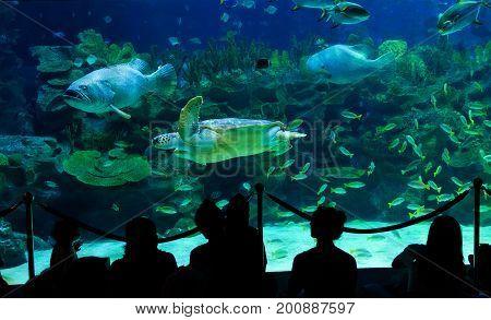 Kuala Lumpur Malaysia - April 18 2015: Sea turtle and many fishes in AQUARIA aquarium in Kuala Lumpur Malaysia