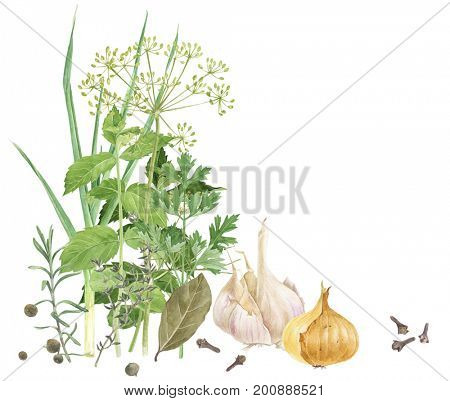 Watercolor fresh herbs and spices isolated on white background