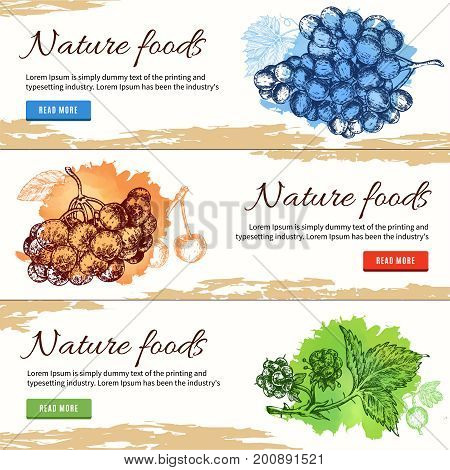 Natural food hand drawn banners with rowanberry grapes and raspberry on white beige background isolated vector illustration
