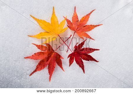 Four red and yellow maple leaves on a white snow background in winter season Autumn maple leaves in the snowy day at Japan