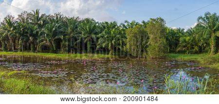 Palm Oil Plantation In Asia. Rural Thailand