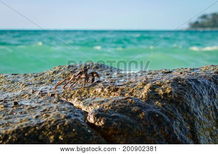 Crabs on a rock. Crabs have a sunbath on a rock near the sea. Thailand