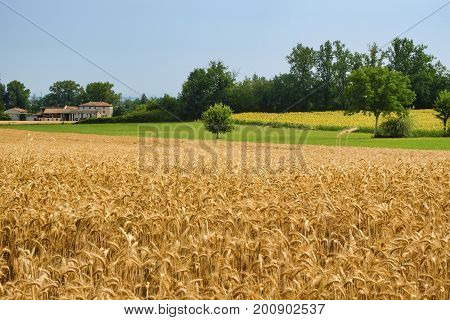 Rural landscape at summertime along the road from Castel San Giovanni to Ganaghello (Piacenza Emilia Romagna Italy) in the Tidone valley
