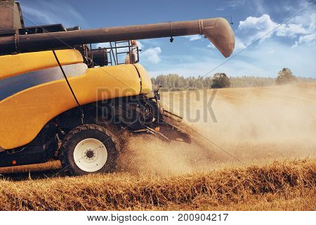 Yellow harvester automatic combine on field harvesting wheat in summer. Agriculture harvesting concept