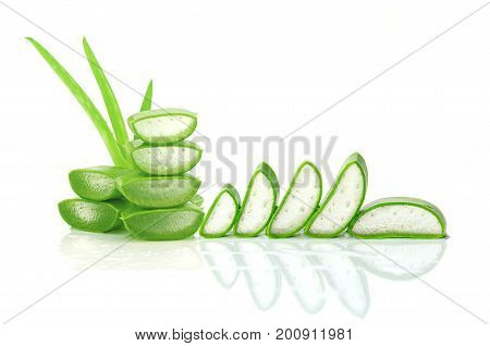 Slice Aloe Vera A Very Useful Herbal Medicine For Skin Care And Hair Care.