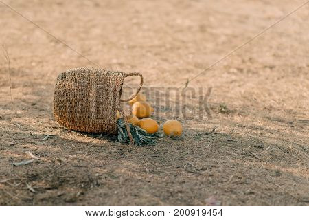 a basket with lemons on the ground