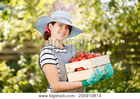 Woman in hat with box tomato in vegetable garden on blurred background