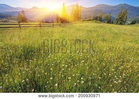 The Alpine Fields Grow Beautiful Spring