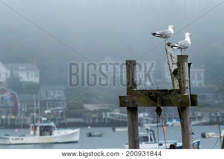 Two seagulls standing on posts look like they are watching over the fishing and lobster boats in the harbor off of Vinalhaven Island in Maine.